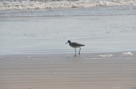 And watched the shorebirds come and go.