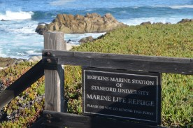 Monterey_008
