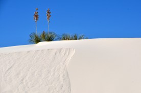 Now that you know the yuccas are reaching down deep under all the sand. That crisp new surface isn't forever, and neither is the part that slid away.