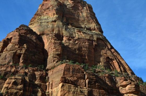 Plants colonize ledges on the rock