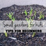 Small gardens for kids: tips for beginners