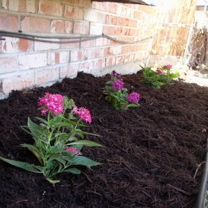 Easy summer garden flower bed