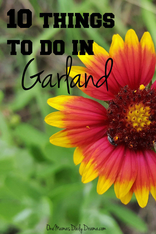 10 things to do in Garland | DFW family activitiy guide