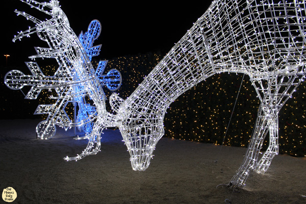 Find all nine reindeer in the Enchant Christmas light maze.
