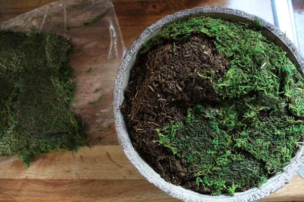 Add the moss.