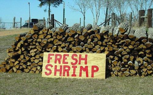 Fresh Shrimp Sign