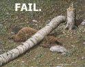 Beaver Tree Fail