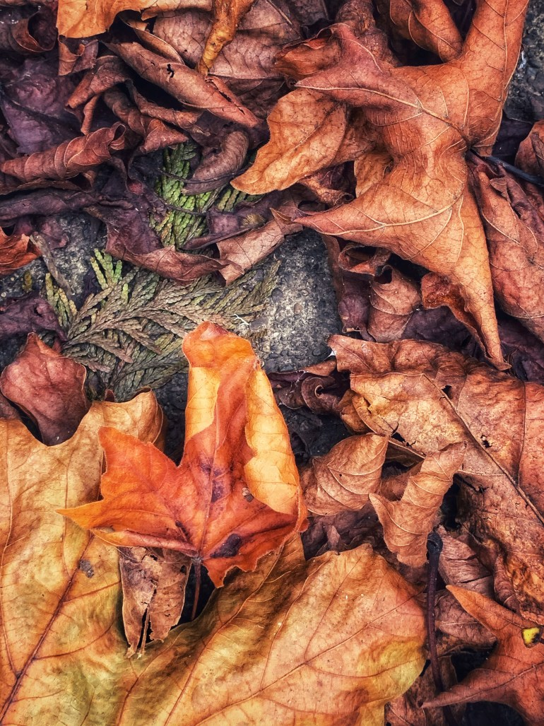 """""""If life is nothing more than a journey to death, autumn makes sense but spring does not."""" ― Craig D. Lounsbrough"""