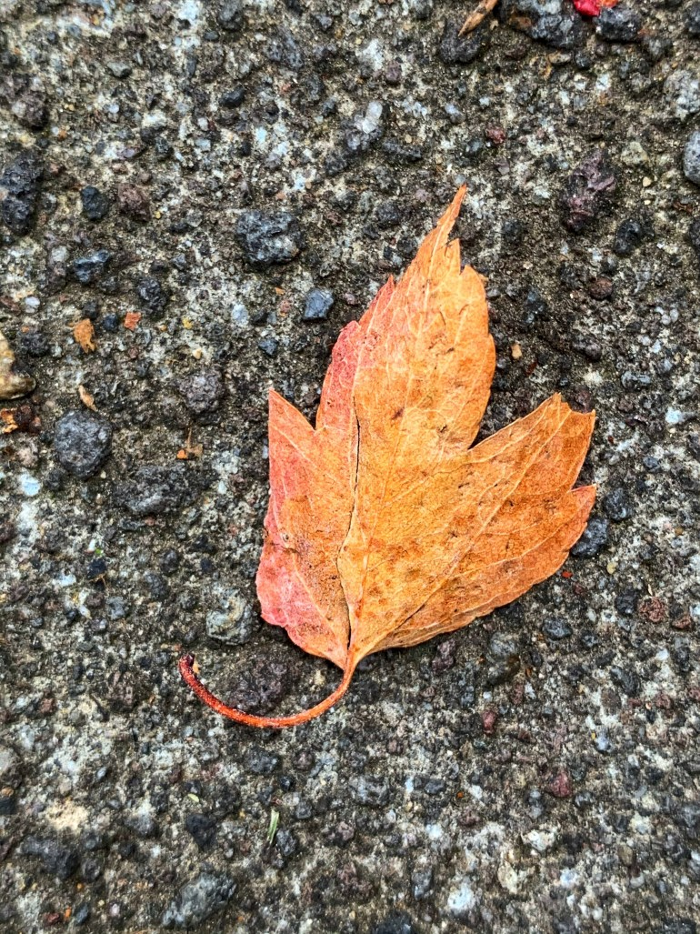 """""""He knocked his pipe out. His paper rustled to the floor and his spectacles slid own his nose. His hands, red and shiny, lay relaxed on his knee. He abandoned himself to the quietness and the warmth of sun and fire. Autumn was a strange paradoxical time of the year. It was the season when he was happiest and yet it was the season when he was most vulnerable and most aware, and that was not always a happiness. Yet he liked autumn."""" ― Elizabeth Goudge, The Dean's Watch"""