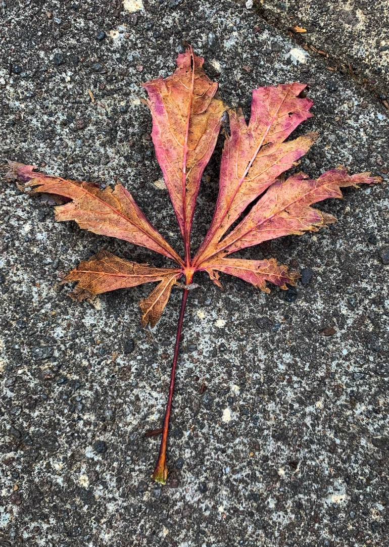 """""""Summer rushes in on the heels of spring, eager to take her turn; and then she dances with wild abandon. But the time soon comes when she gratefully falls, exhausted and sated, into the auburn arms of autumn."""" ― Cristen Rodgers"""