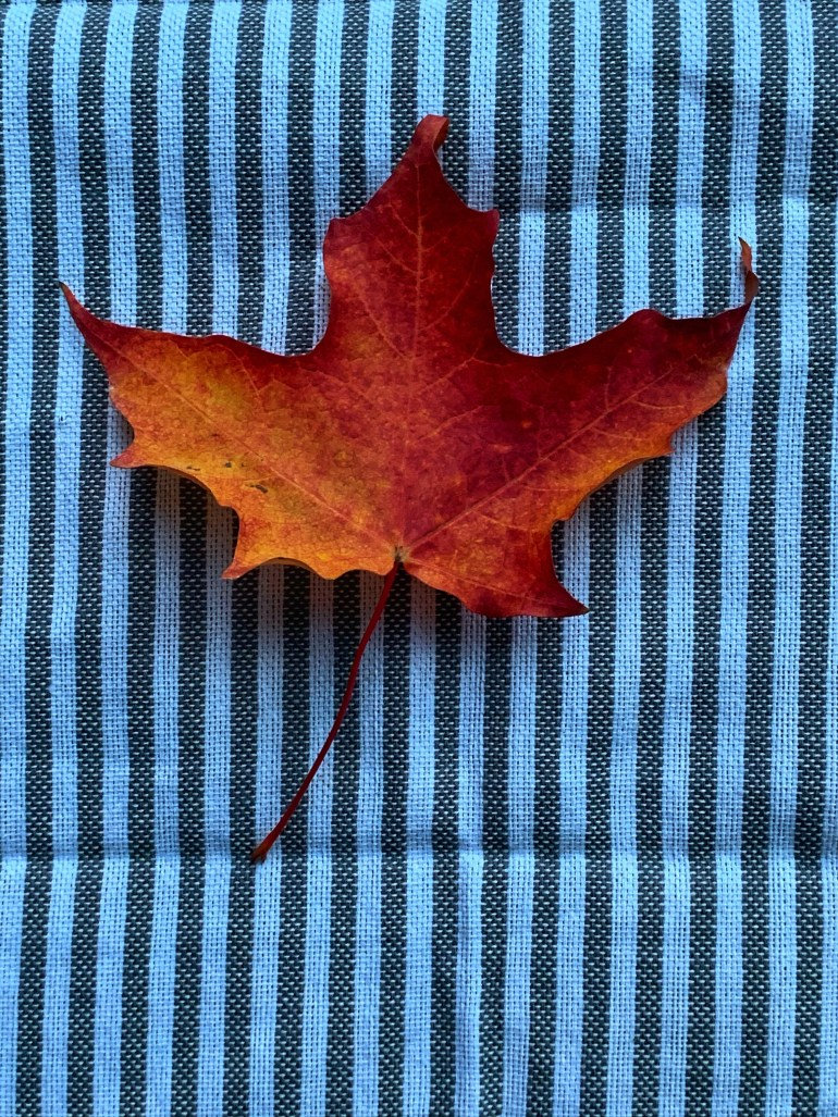 """""""There was a kind of autumnal stain in the air that reminded me of the smell of leather work gloves, a high-school locker room at homecoming, the inside of an ancient canvas tent."""" ― Michael Chabon, Wonder Boys"""