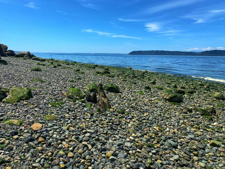 A Summer Afternoon at Mukilteo Beach in Washington State