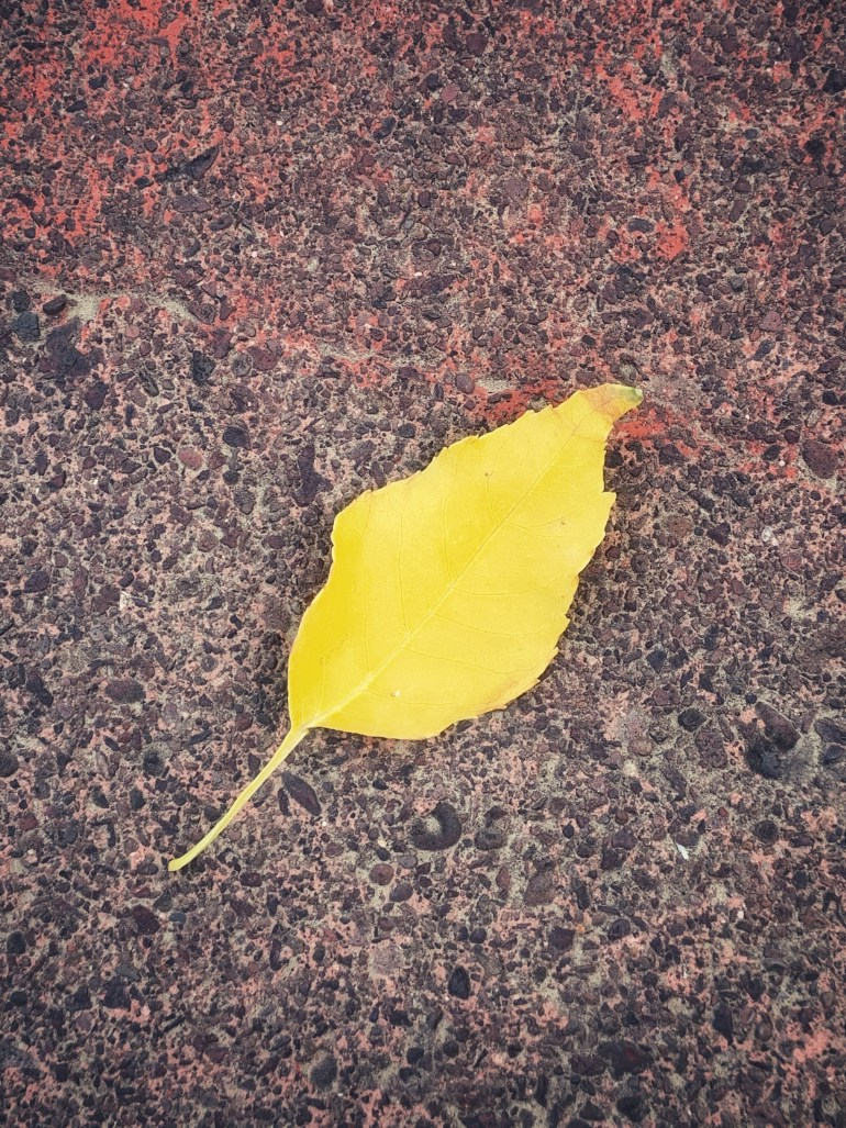 """""""I can sometimes hear her music now, after thirty years -- and remember the leaves falling on some smoky autumn afternoon, the air crisp and the sounds of dogs barking, and train whistles far away."""" ― Willie Morris, North Toward Home"""