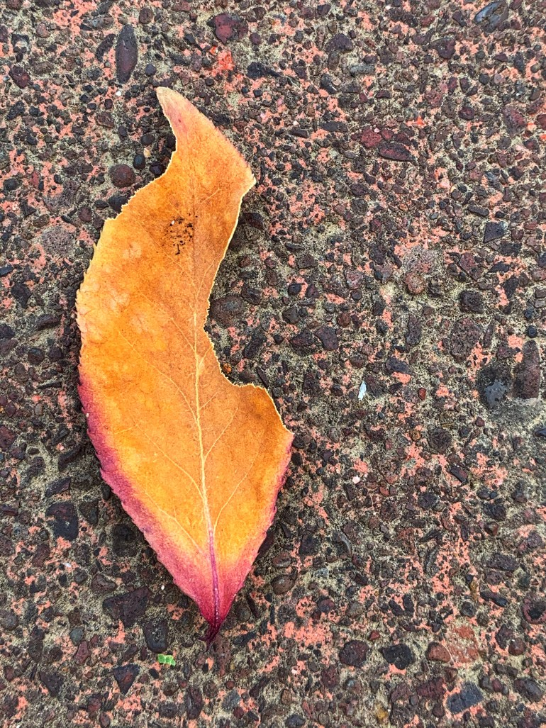 """""""It's not that you were memorable, but you had the quality of eternal details, like faded graffiti, abandoned newspapers,  or a few smudged notes, almost an offbeat line, scribbled as if by mistake amid the frenzy of Bliss Street."""" ― Zeina Hashem Beck, To Live in Autumn"""