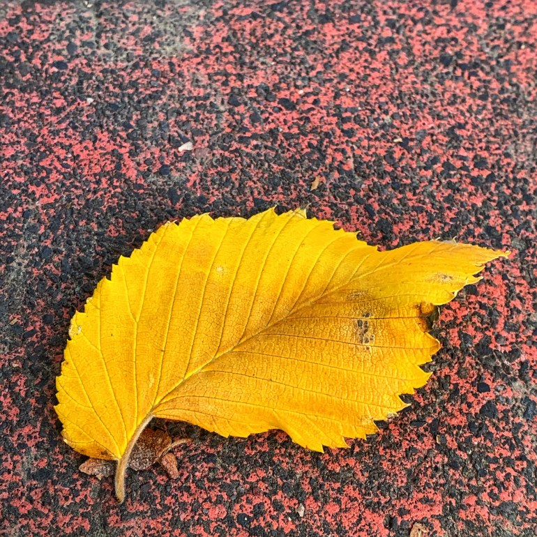 """One day I watched a man sweep all the yellow leaves off the street in front of his house, and then he proceeded to do the same thing in front of his neighbor's houses on both sides. If I was the neighbor I'd be mad. Leave my leaves alone, I'd think. As soon as the man went back in there was a gust of wind and a couple leaves trickled into his clear pristine black tar, and I laughed out loud, as if I'm not always trying to stave off death and the death of my loved ones."" ― Shilo Niziolek, SLAB"