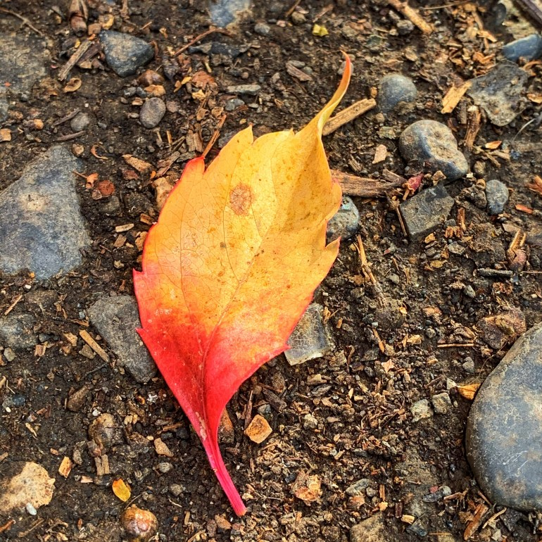 """""""Autumn is the time of year when Mother Nature says, """"Look how easy, how healthy, and how beautiful letting go can be."""" ― Toni Sorenson"""