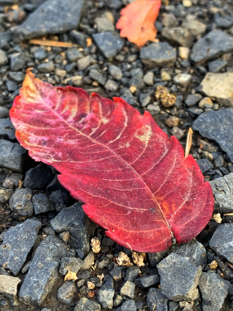 """""""I was supposed to be part of a story, but I fell from there like a leaf in autumn."""" ― Orhan Pamuk, My Name Is Red"""