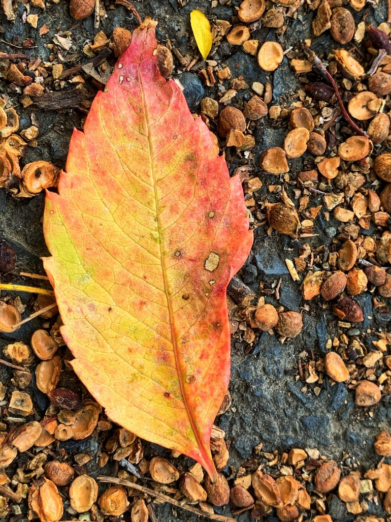 """""""When fall comes to town, lovers, letters, and leaves reunite on the sidewalks, broken, burnt, and brown."""" ― Akash Mandal"""