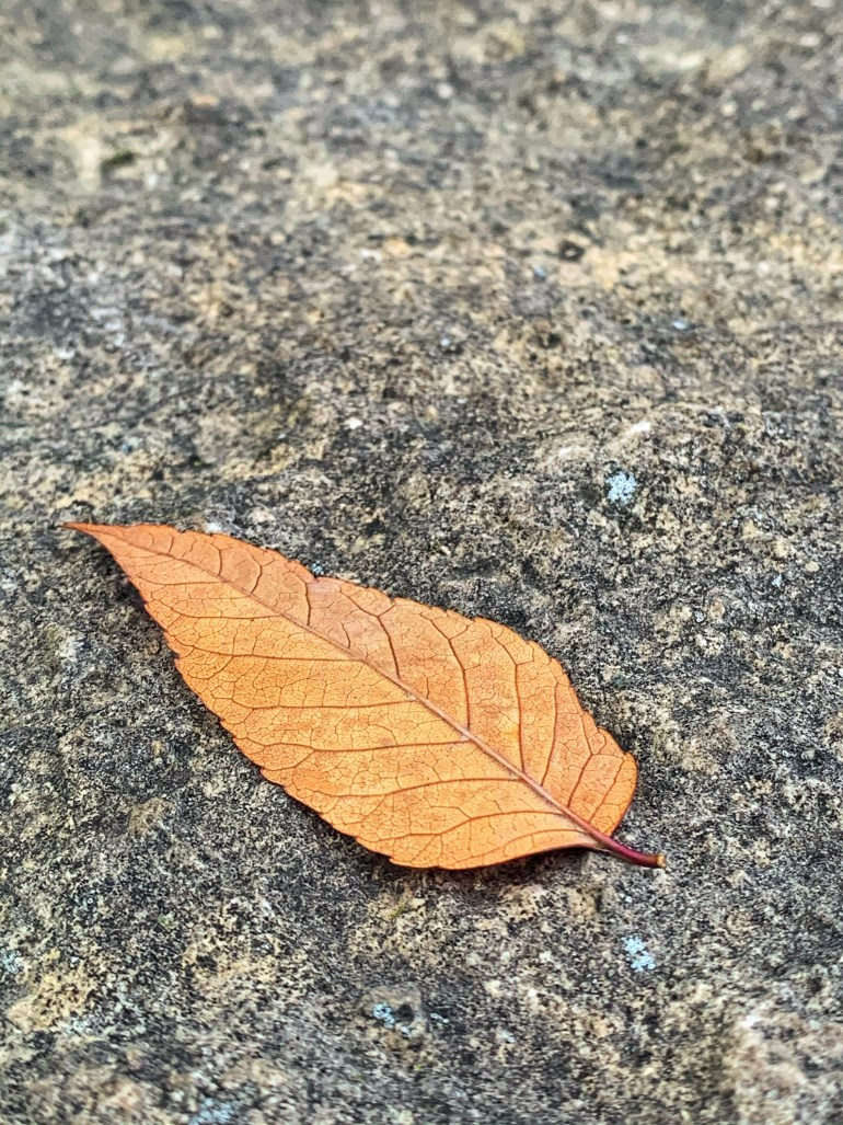 """""""AUTUMN AIR  The autumn air is clear, The autumn moon is bright. Fallen leaves gather and scatter, The jackdaw perches and starts anew. We think of each other- when will we meet? This hour, this night, my feelings are hard."""" ― Li Bai"""