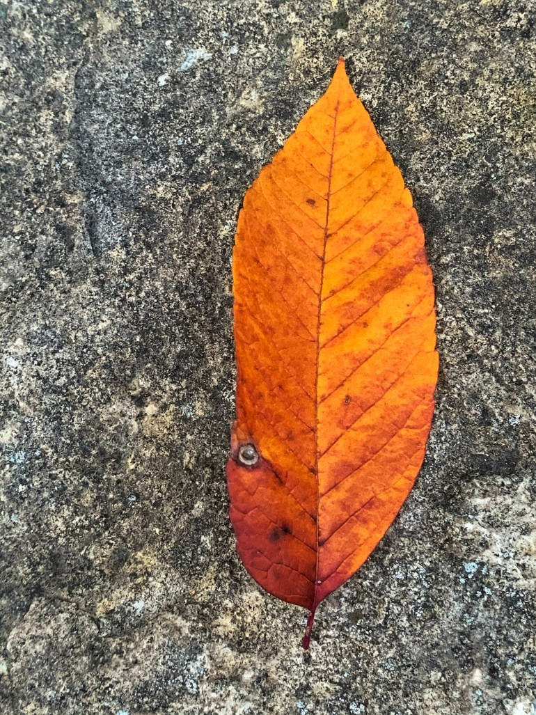 """""""Autumn was coming; the evergreens might not have noticed, but the sycamores did."""" ― Delia Owens, Where the Crawdads Sing"""