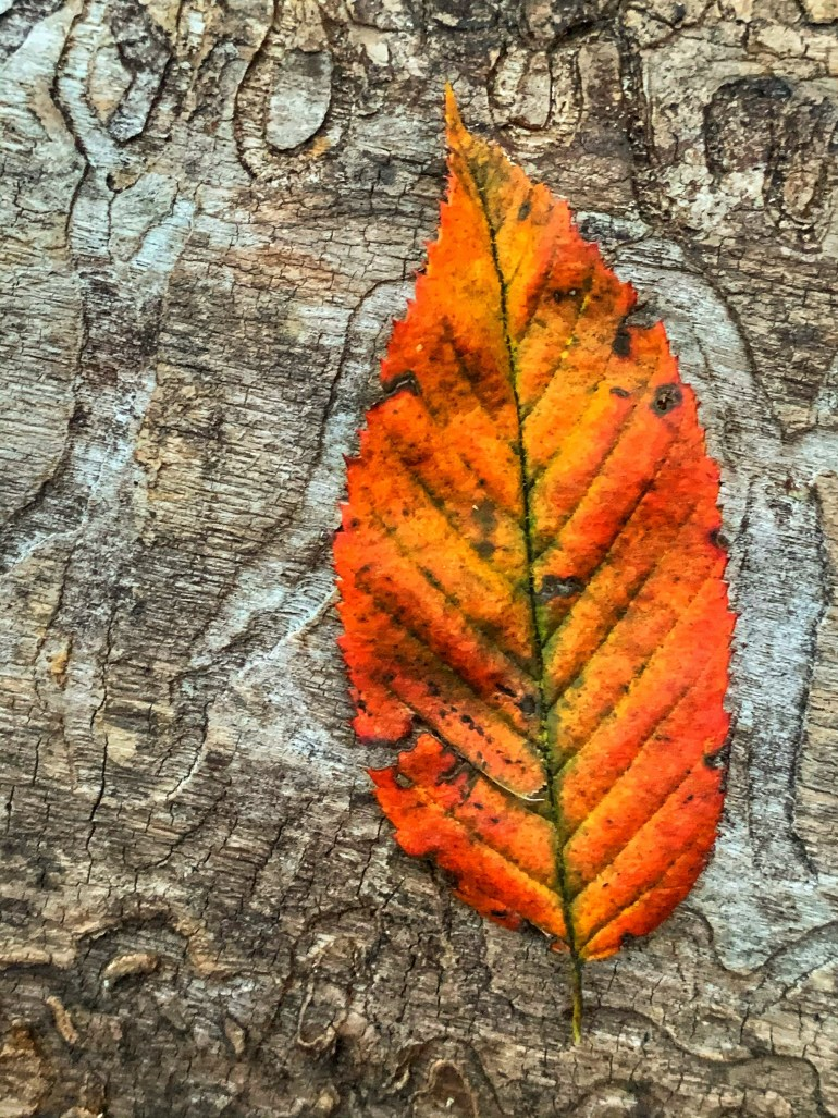 """""""I am falling in love with autumn all over again"""" ― Charmaine J Forde"""