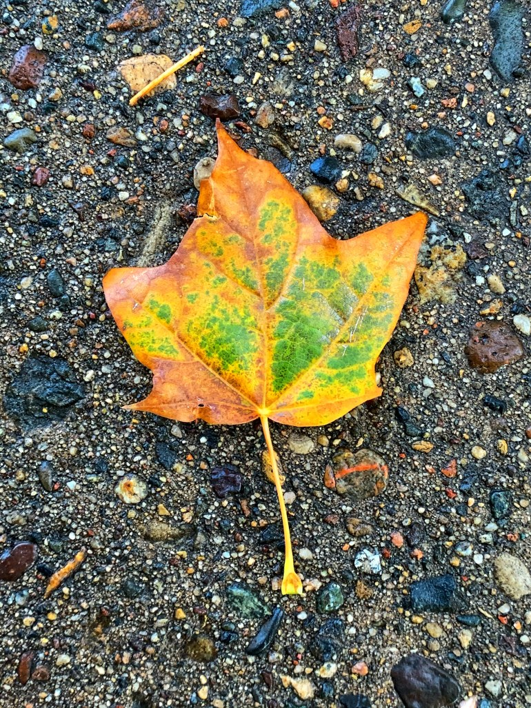 """""""Rest your eyes well before September because with all its colours autumn is coming to visit them!"""" ― Mehmet Murat ildan"""