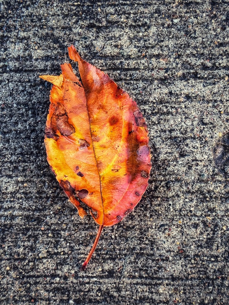 """""""As the season changes, we learn to adapt."""" ― Lailah Gifty Akita, Pearls of Wisdom: Great mind"""