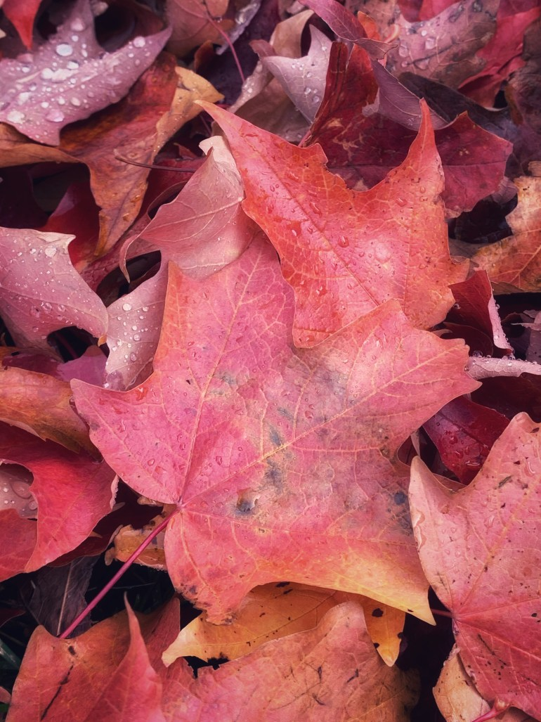 """""""You have so many autumns: so many selves, waiting to be shaken down."""" ― Zhou Mengdie"""