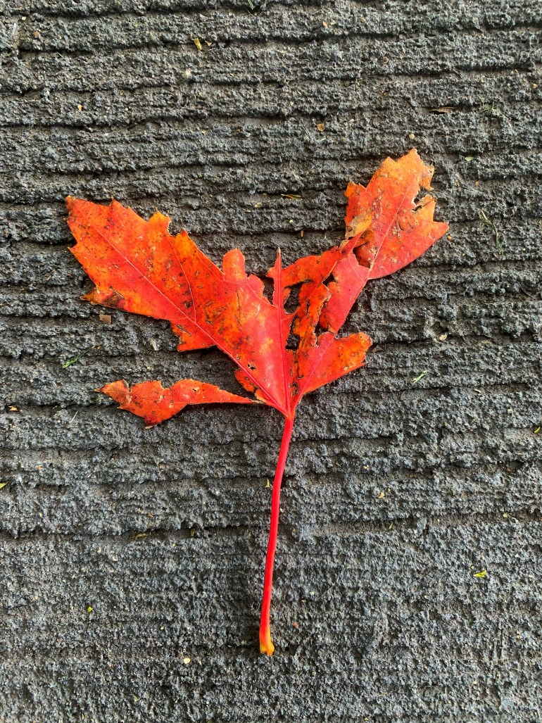 """""""Autumn came early and lingered with its shroud of rainstorms and its wreath of dead leaves."""" ― Angela Panayotopulos, The Wake Up"""