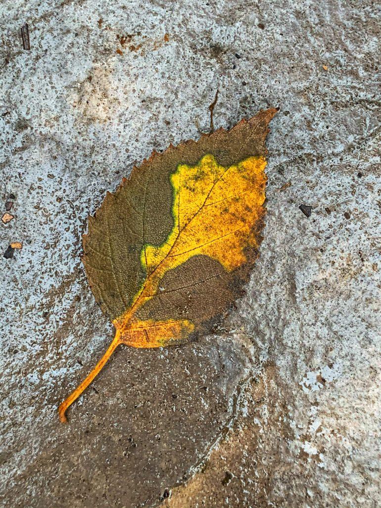 Fall Foliage in Pendleton, Oregon