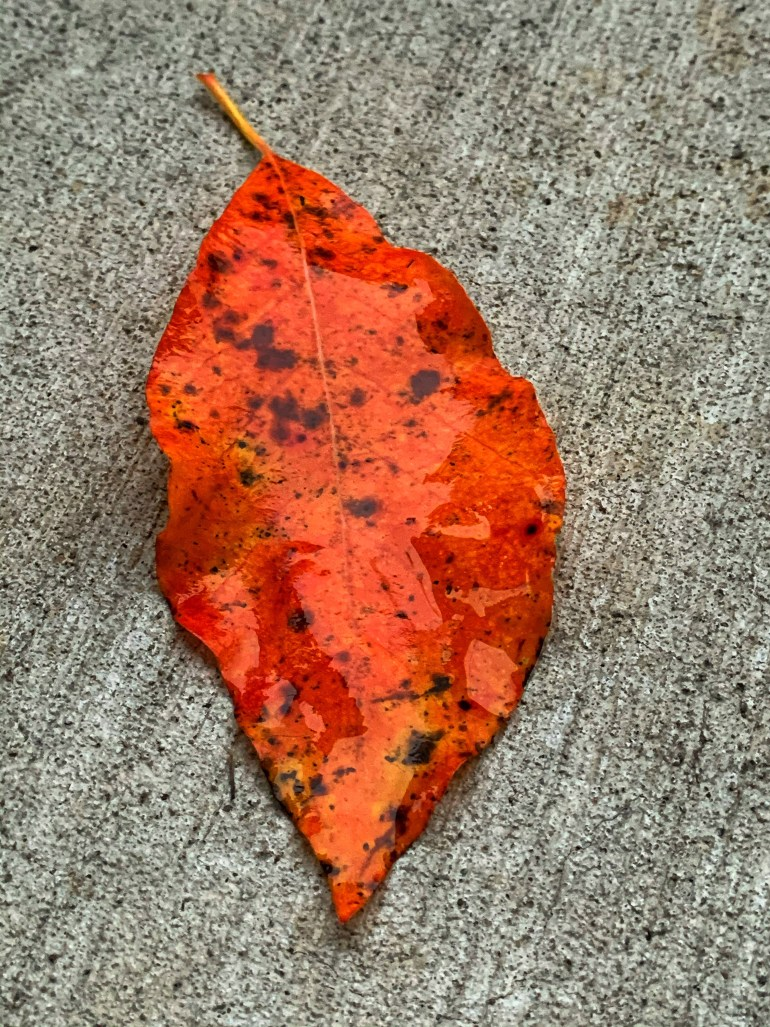 """""""The student asked: Can I walk on dry leaves without making a sound? The master replied: Light can do it, and shadow can do it. Which one are you? The student replied: None! Master replied: Then have fun with the sound of the leaves!"""" ― Mehmet Murat ildan"""