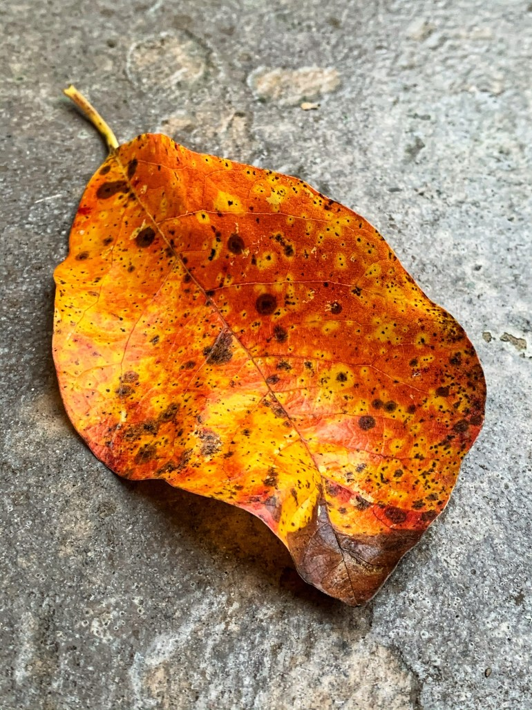 """""""i learnt from the autumn leaves, the formula of healing. every year, they break, fall off the trees and die. and then again in a few months, they find their way back home. reborn, living a new life just to die again. but never did that stop them growing again. so why can't we humans just live up to them. fall, get hurt, bear pain but have enough courage and energy to stand up and fight back again."""" ― Renesmee Stormer"""