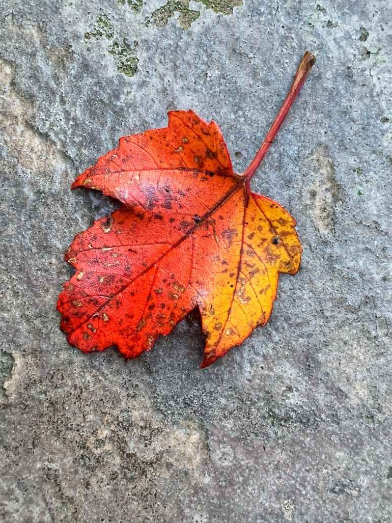 Vibrant Fall Colors at the Hoyt Arboretum in Portland, Oregon