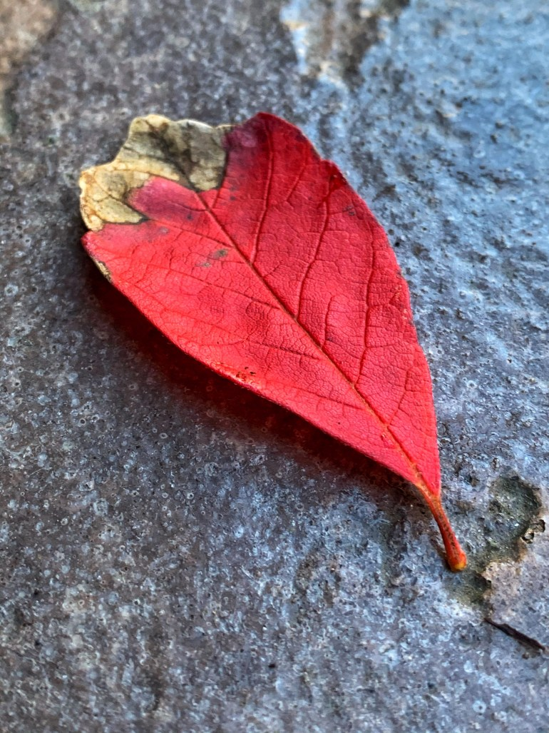 """""""In every change, in every falling leaf there is some pain, some beauty. And that's the way new leaves grow."""" ― Amit Ray"""