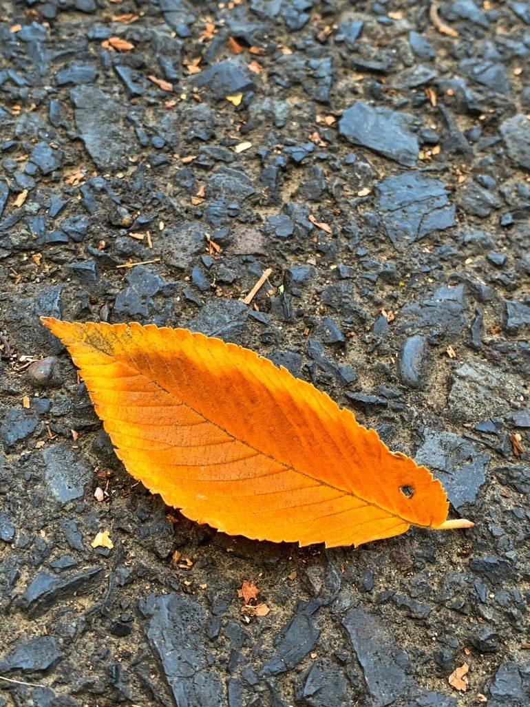 Pacific Northwest Fall Foliage 2020