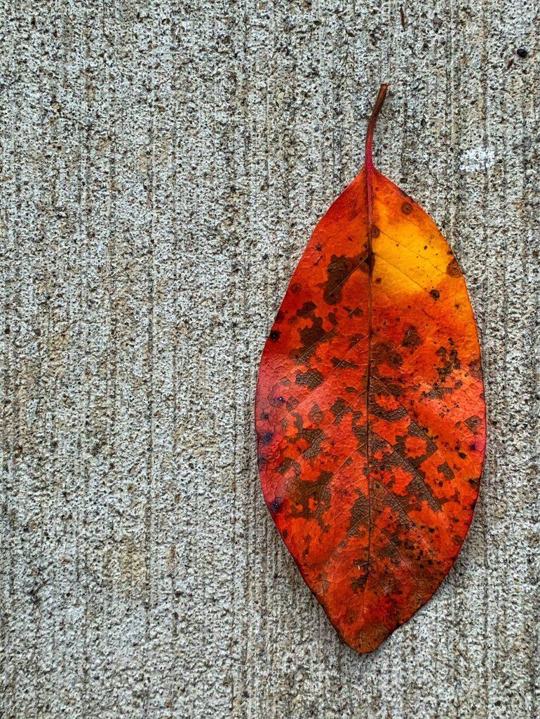 Celebrating Color: Fallen Leaves