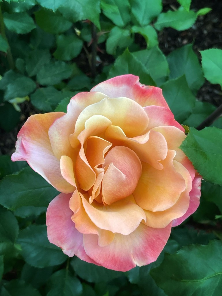 July 5, 2021 Flower of the Day