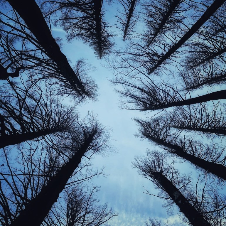 Look Up: A Winter Hike to Angel's Rest in Oregon