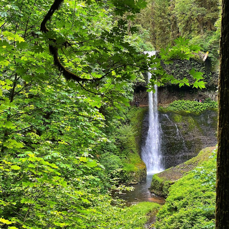 Waterfalls and Trees Part II: Silver Falls State Park, Oregon