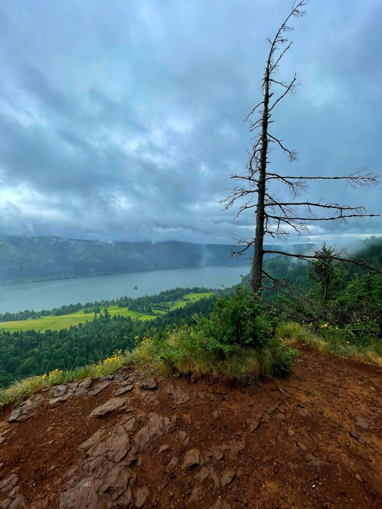 Remains of Last Summer's Forest Fires: Hiking Cape Horn in Washington State