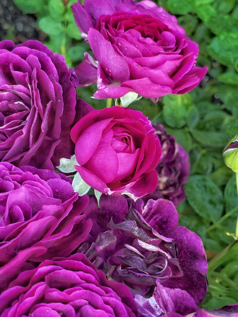 Piles and Piles of Purple Petals