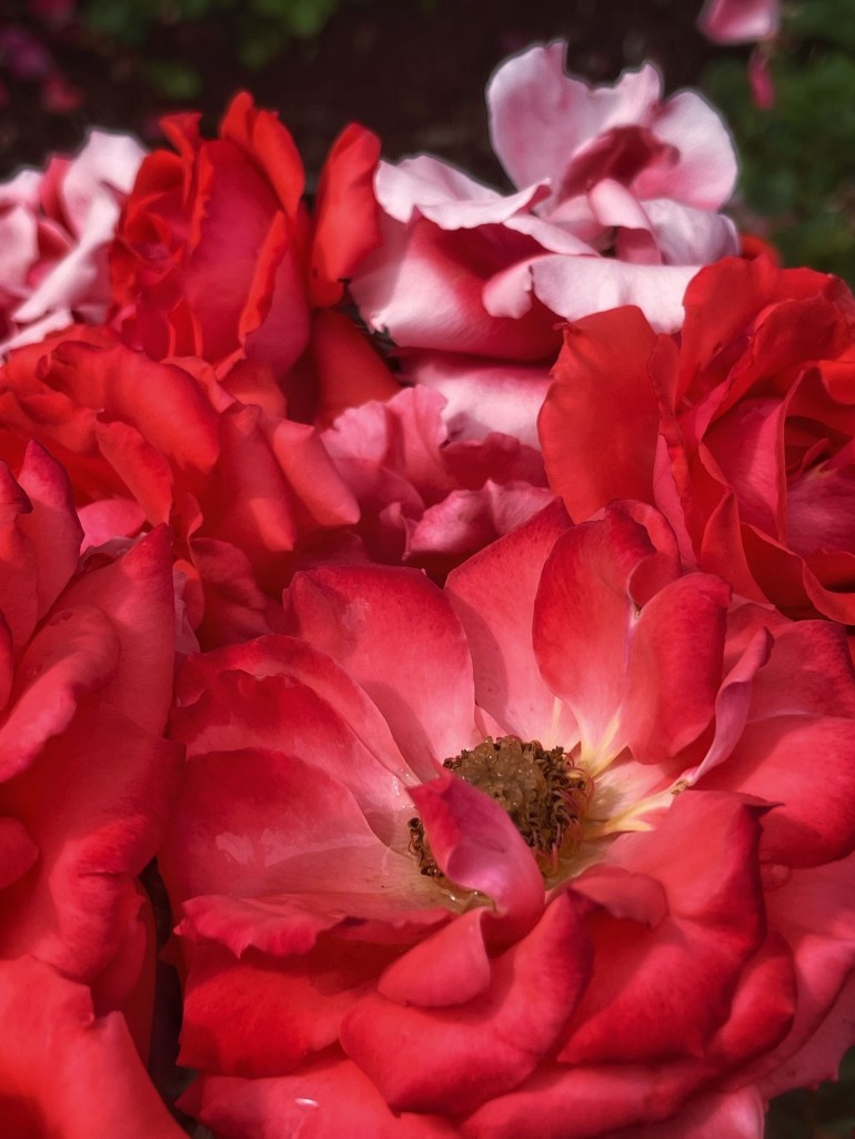 Inspired by Nature: Piles of Red Petals