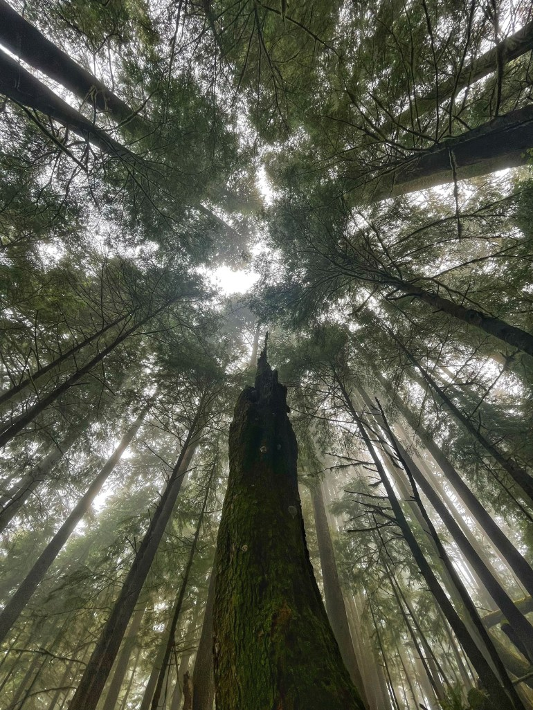 Look Up: At Ecola State Park, Oregon