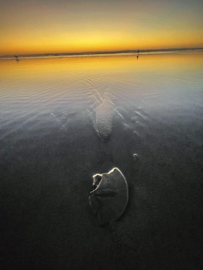 Hunting for Sand Dollars in Seaside, Oregon