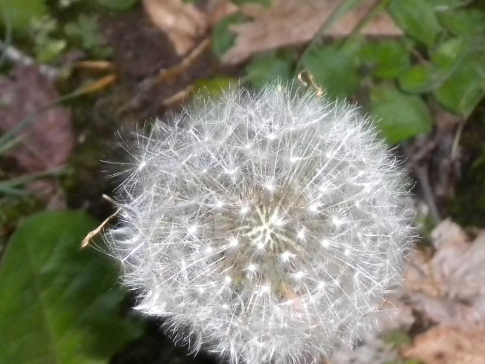 Make A Wish (2/5)