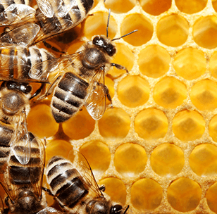 beeproduct.png