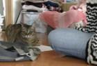猫に聞く(2)「外の猫と家の猫」