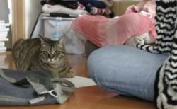 猫に聞く(1)にゃんままミロクさんとのリアル対面