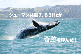 humpback-whale-in-hawaii-kiseki7-83