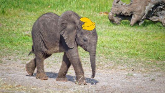 DumboLiveAction